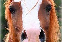 All the pretty horses♞♘ / Horses