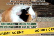 moehschweinchenfarm / Meerschweinchen, Meeris und viel Magazin