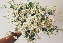 Flowers / Des fleurs en veux-tu en voilà...