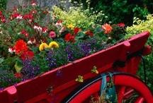 Greenhouse & Gardening 3