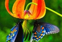 Nature: Flying in the Wind / I have always loved colorful butterflies, moths, and dragonflies. They remind me of small children running through the garden touching everything they find colorful and interesting. The bolder they are in color the better I love them.  / by Bess Ard
