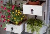 Gardening and Patio Ideas / Gardening, Square Foot Gardening, Patio ideas and Decor
