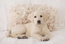 Pet Photography / by Aimee Pool Photography