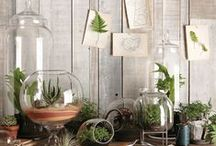 Crafts / Green DIYs / green . DIY . projects . crafts . hobby . eco . friendly . environmental . creative . smart . ideas . innovative . indoors . plants . flowers . reclaimed . recycled . reuse . upcycle . wood . glass / by Laura Lin