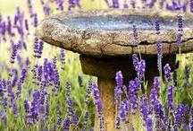 Garden / Gardening is good for the soul. / by Alisa Kolenovic-Metahic