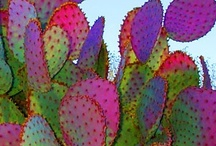 Les Fleurs (and Cactus/Succulents too!) / by Penny Kling