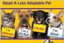 Dogs / Please adopt your next pet from a rescue shelter or a stray or a senior dog. You will gain a very grateful and loving friend for life. Please do not support the barbaric puppy mill industry by buying your pet(s) from a pet store or an online store. / by Buddy2Blogger