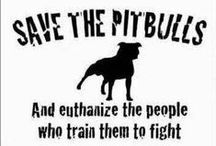 Pit Bulls / All about Pit Bulls - A very misunderstood and a genuinely wonderful breed of dogs. Please do not believe in the media hype. Adopt a Pit Bull and learn the truth. / by Buddy2Blogger