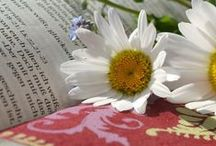 Faith | Bible Studies & Resources / Bible studies and resources to help you grow in your relationship, knowledge, and wisdom of our God and Savior.