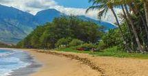 Beach Vacations / Sun, Sand, and Palm Trees.  I Love the Beach!