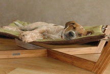 Pet Project / DIY projects and helpful tips to keep your pets happy and healthy. / by TOTEM