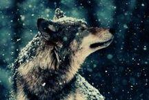 Dogs/Wolfs