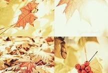 Autumn / by Cindy Ewald