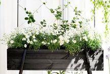 Greenhouses & Indoor Gardening / Greenhouses, indoor gardening, growing plants / by A Storybook Life