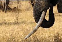 Tarangire National Park / Amazing colletions of images taken in Tarangire National PArk www.safarijunkie.com
