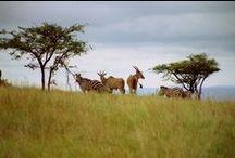 Akagera National Park / Rwanda