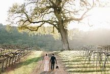 Wedding Shots / by Jennifer
