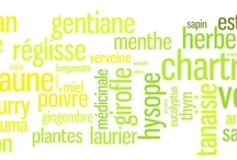 Herbs, plants & spices  ! / Are they among the 130 and so secret ingredients that compose the chartreuse recipe ?!