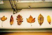 autumnal / always