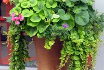 CoNtAiNeR gArDeNs / by Lynn McAlexander