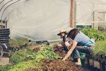 tender / growing a farm life