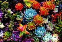 Learning About Succulents / by Carol Perkins