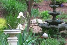 My Carolina Garden / Siberian Iris and Creeping Jenny with Japanese Maple in foreground / by Karen Puchaicela