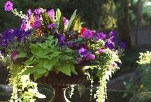 container gardening / by Karen Puchaicela