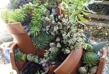 Lawn & Garden & Outdoor Living / Finding cute things for my outdoor living space and gardens.