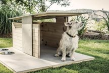 It's A Dog's Life / For our furry friends & pampered pooches