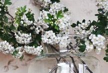 Flowers / Les Fleurs / by Christina Said... I Christina Koczan
