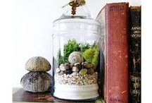 Terrarium Mini Gardens / Terrarium  / by Angela Larsen