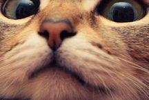 Mais amiguitchos felinos / Quarta-feira,dia de olhar outros gatinhos