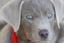 {Puppy Love} / Puppies!