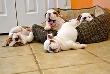 Awwwww puppies & dogs