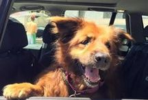 Adoptable Senior Dogs / Senior #dogs available for #adoption. Help us find them a new forever home! Every week we're sharing a new dogs. #BayArea #SF
