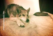 Grouchy Puppy | Inspiring Senior Dog Stories