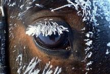 Horses / LOVE horses!
