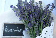 My Lavender Farm