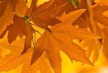 Autumn~ My Favorite! / by Julie Ann Castello