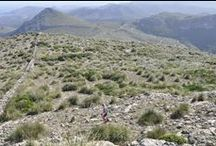 Trail Running / Trail Running