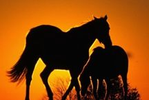 """Horses / Horses are strong and gentle, stalwart and proud!   I wish I owned one.  This is a group board for horses If you would like an invite, FOLLOW this board and  send me a comment on my """"ADD ME"""" pin  / by Edie Jacobs"""