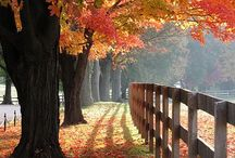 Fall / Everything to do with the Fall season - recipes, decorations, etc... / by Suzy Plantamura