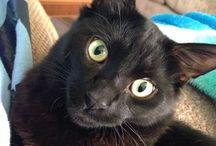 Black Cats / by Leslie Harvey
