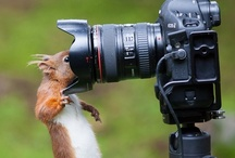 Photography / A photo is worth a thousand words... / by Doris Robinson