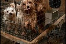 Puppy Mill Info / by National Mill Dog Rescue