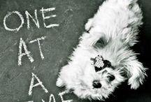 Dog Quote Inspiration