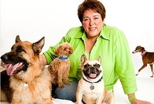 NMDR in the News / National Mill Dog Rescue in the news!