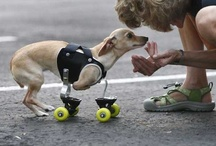 Disabled Pet Resources / by National Mill Dog Rescue