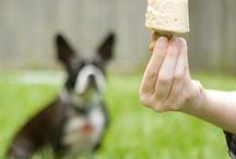 DOG [Treats & dog food recipes]